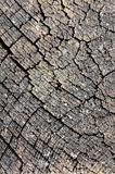 Surface of cutting tree Stock Photography