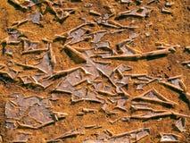 Surface d'écaillement. Images stock