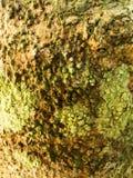 Surface d'écorce Images stock