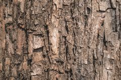 Surface d'écorce d'arbre dans la forêt images libres de droits