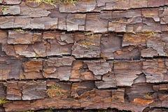 Surface d'écorce fendue Photographie stock libre de droits