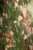 Surface d'arbre images libres de droits