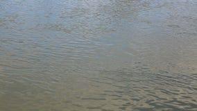 Surface d'eau de rivière banque de vidéos