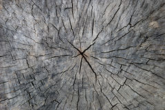 Surface d'un vieux moignon Photo stock