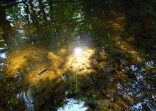 Surface d'une lumière du soleil se reflétante d'étang peu profond et des silhouettes des arbres Images libres de droits