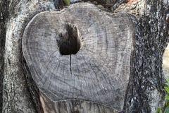 Surface de coupe de l'utilisation du bois d'arbre d'écorce en tant que texture de fond naturel photographie stock