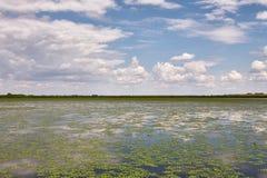 Surface de l'eau avec des usines image libre de droits