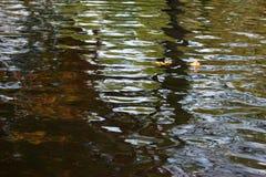 Surface de l'eau de Wawy avec des feuilles d'automne Images libres de droits