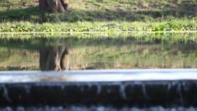 Surface de l'eau sur le barrage banque de vidéos