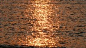 Surface de mer dans la lueur du coucher du soleil d'or clips vidéos