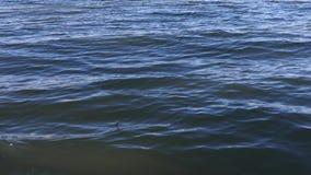 Surface de ondulation de l'eau banque de vidéos