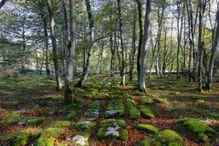 Surface de pavement calcaire en forêt de nature de Monte Santiago en Espagne image libre de droits
