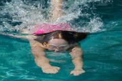 Surface de plongée de fille Photos libres de droits