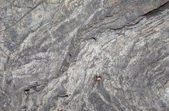 Surface de roche Image libre de droits