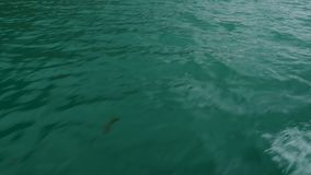 Surface of a deep green water. Small waves on the surface of a deep green water stock video footage