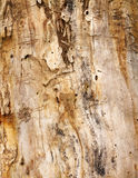 Surface of the dry tree Royalty Free Stock Photos