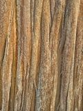 The surface of the dry wood fibers. The surface of the dry wood fibers royalty free stock photography