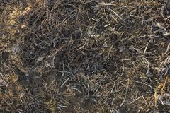 The surface of the earth covered with ash. royalty free stock photo