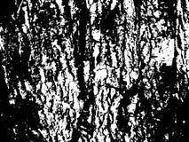 Surface en bois criquée d'écorce Texture en bois d'écorce Texture âgée de panneau de bois de construction Images stock