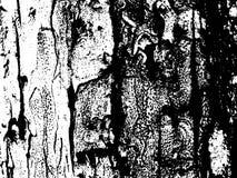 Surface en bois d'écorce de tronc Texture en bois d'écorce Texture âgée de panneau de bois de construction Image libre de droits