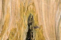 Surface en bois de grain de fond Images libres de droits