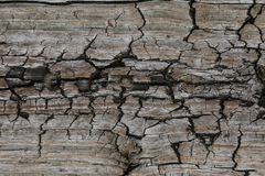 Surface eroded by time,Old wood background. texture stock photo