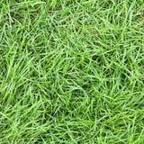 Surface fraîche d'herbe verte Image libre de droits