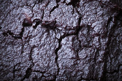 The surface of fresh chocolate biscuit for background. Toned Stock Images