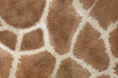 Surface of Giraffe Leather skin background. Royalty Free Stock Photography