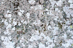 The surface of a glacial erratic royalty free stock photo