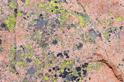 Surface Of A Granite Rock. Covered by lichen Royalty Free Stock Photography