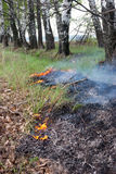 Surface grass fire in a forest Stock Image