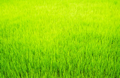 Surface grass Royalty Free Stock Image