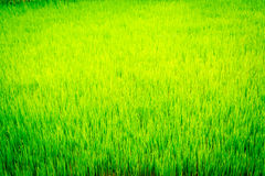 Surface grass Stock Images