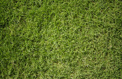 Surface Grass Royalty Free Stock Photography