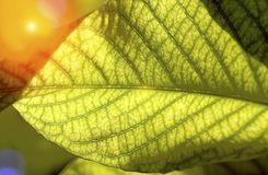 Surface Green leaf pattern Stock Image