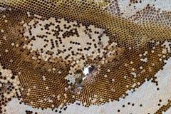 Surface hem Honeycomb Royalty Free Stock Photos