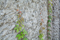 Surface of impromptu concrete wall. Stock Images