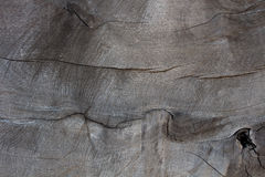 The surface of the large trees that were privatization with trac Royalty Free Stock Photos