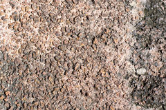 The surface of the laterite. And Surface roughness Stock Photos
