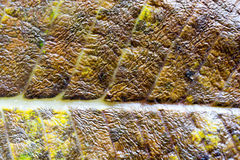 The surface of the leaf of the tree,Leaf macro, detail, color, clarity, lines, shading. Stock Photos