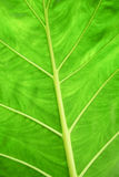 Surface of leaves Royalty Free Stock Photography