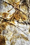 Surface limestone with veins. Abstract background or texture surface limestone with veins stock image