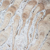 Surface of the marble Royalty Free Stock Photo