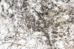 Surface of marble Royalty Free Stock Photos