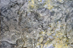 Surface of the marble stone treated Royalty Free Stock Photo