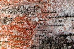 Birch bark turned to red Stock Photo