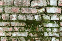 The surface of an old brick wall covered with moss. The surface of an old brick wall covered with green moss Royalty Free Stock Image