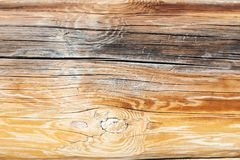 Surface of old log Royalty Free Stock Images