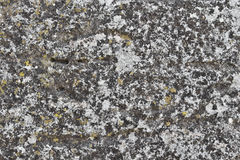 Surface of old stone Royalty Free Stock Photography